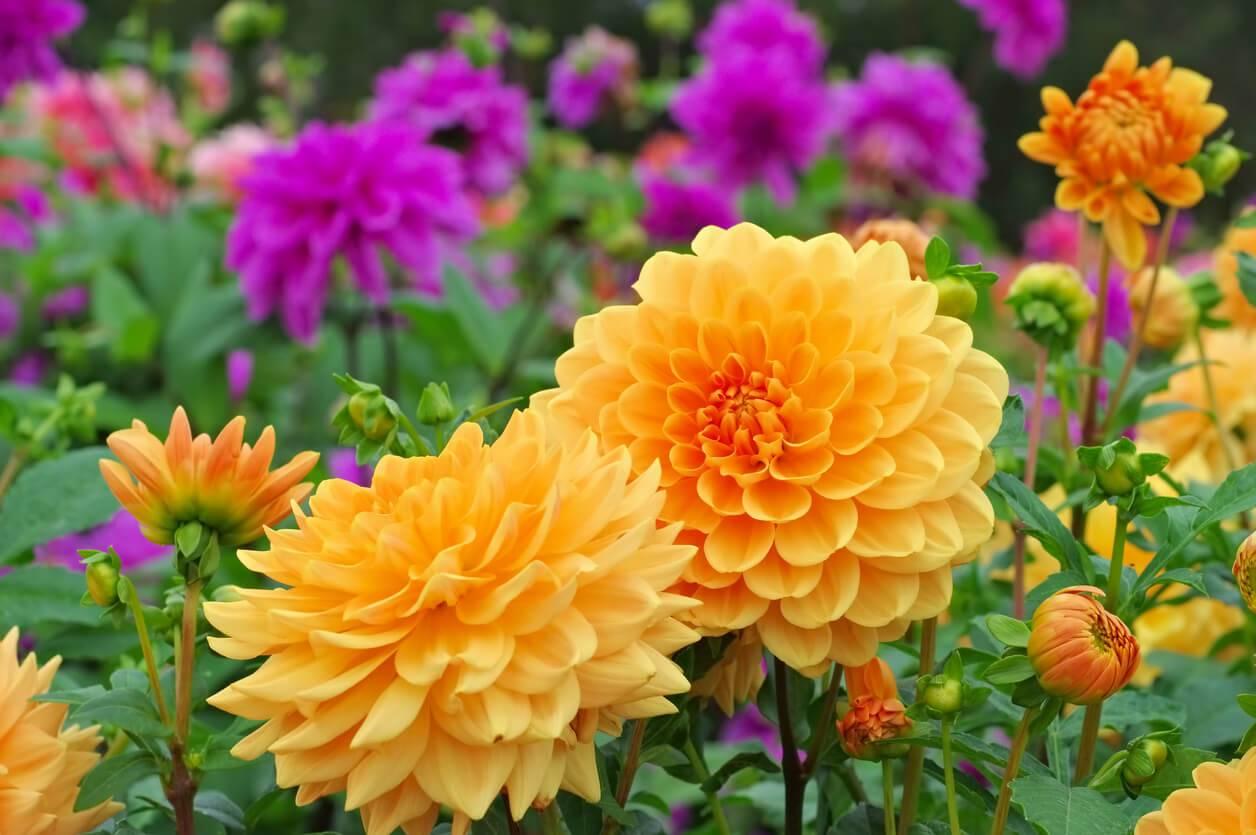 jardin les fleurs planter au printemps. Black Bedroom Furniture Sets. Home Design Ideas