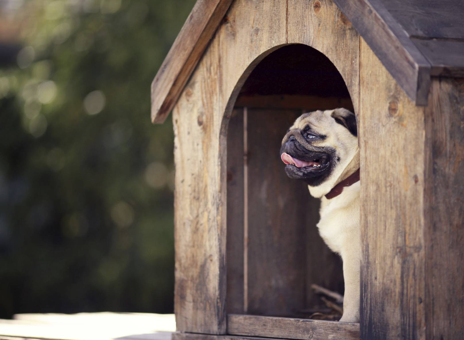 Conseils d 39 entretien d 39 une niche pour chien - Comment garder une vitre d insert propre ...