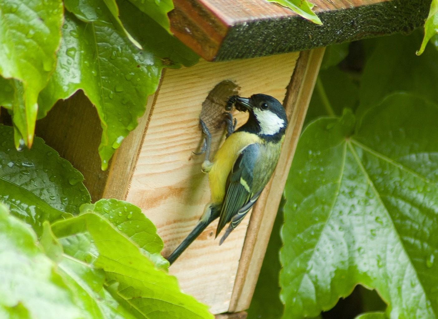 Choisir l 39 emplacement de votre nichoir pour oiseaux - Oiseaux metal pour jardin ...