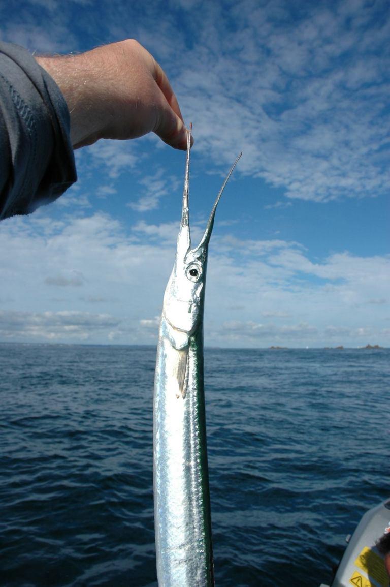 Principaux poissons d 39 eau de mer for Acheter des poissons