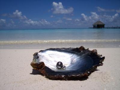 """Résultat de recherche d'images pour """"perle noire nacrée d huitre"""""""