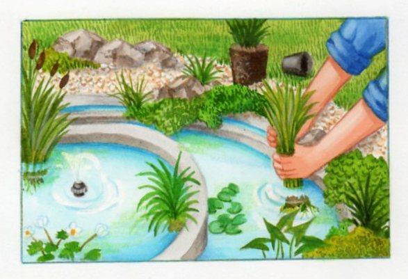 Petits bassins de jardin comment les installer - Plantes oxygenantes pour bassin ...
