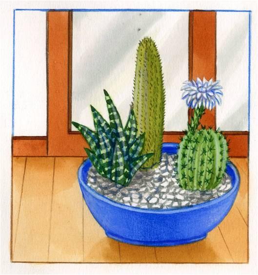 Soigner et entretenir des cact es - Entretenir un cactus ...
