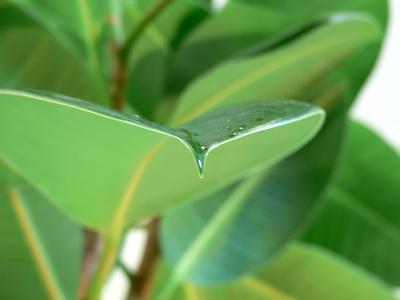 Plantes vertes choix et entretien des plantes d 39 int rieur ou plantes d 39 appartement - Plantes vertes d interieur photos ...