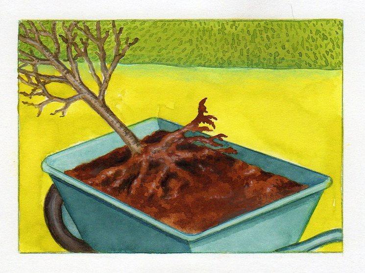 planter un arbre nos conseils pour planter un arbre. Black Bedroom Furniture Sets. Home Design Ideas