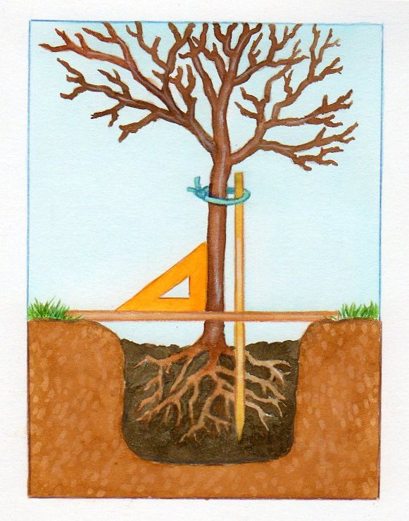 planter un tuteur