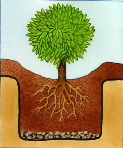 planter et entretenir des plantes de terre de bruy re. Black Bedroom Furniture Sets. Home Design Ideas