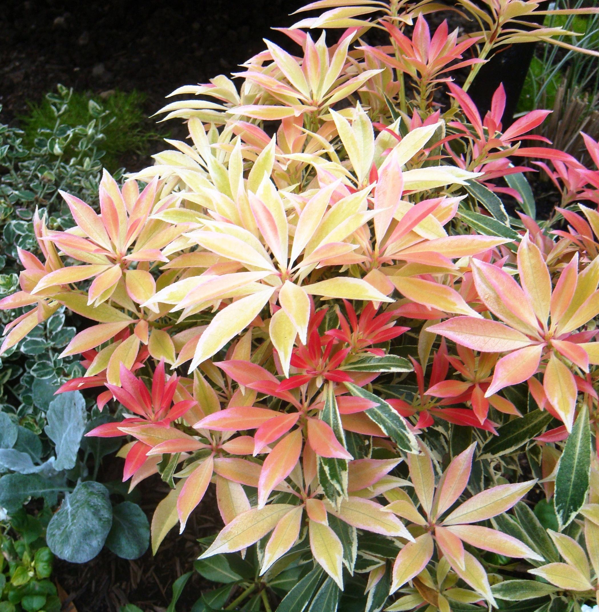 Plantes feuillage color vivaces for Petites plantes vertes