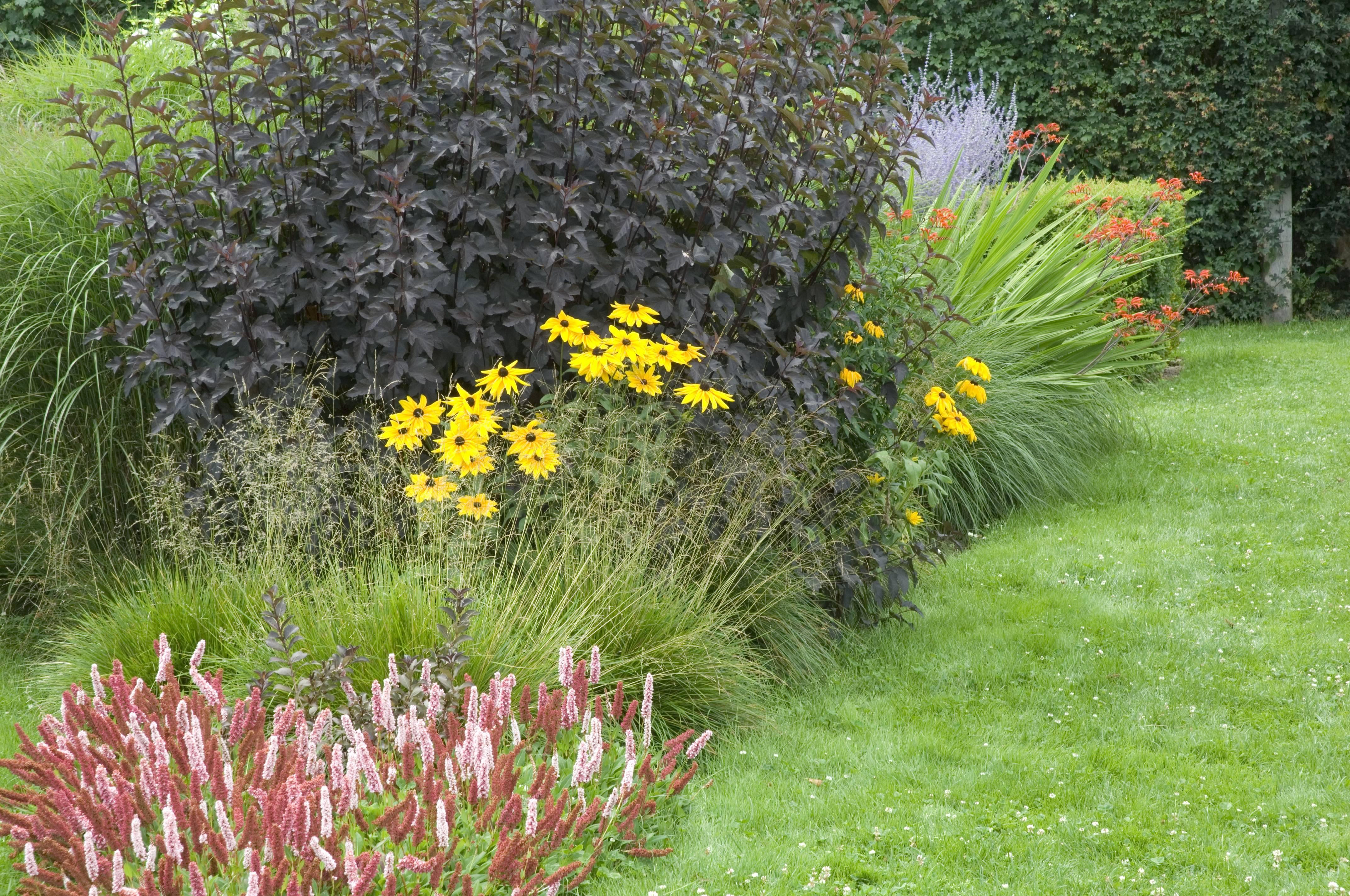 Plantes indispensables pour la mixed border for Marre de jardin