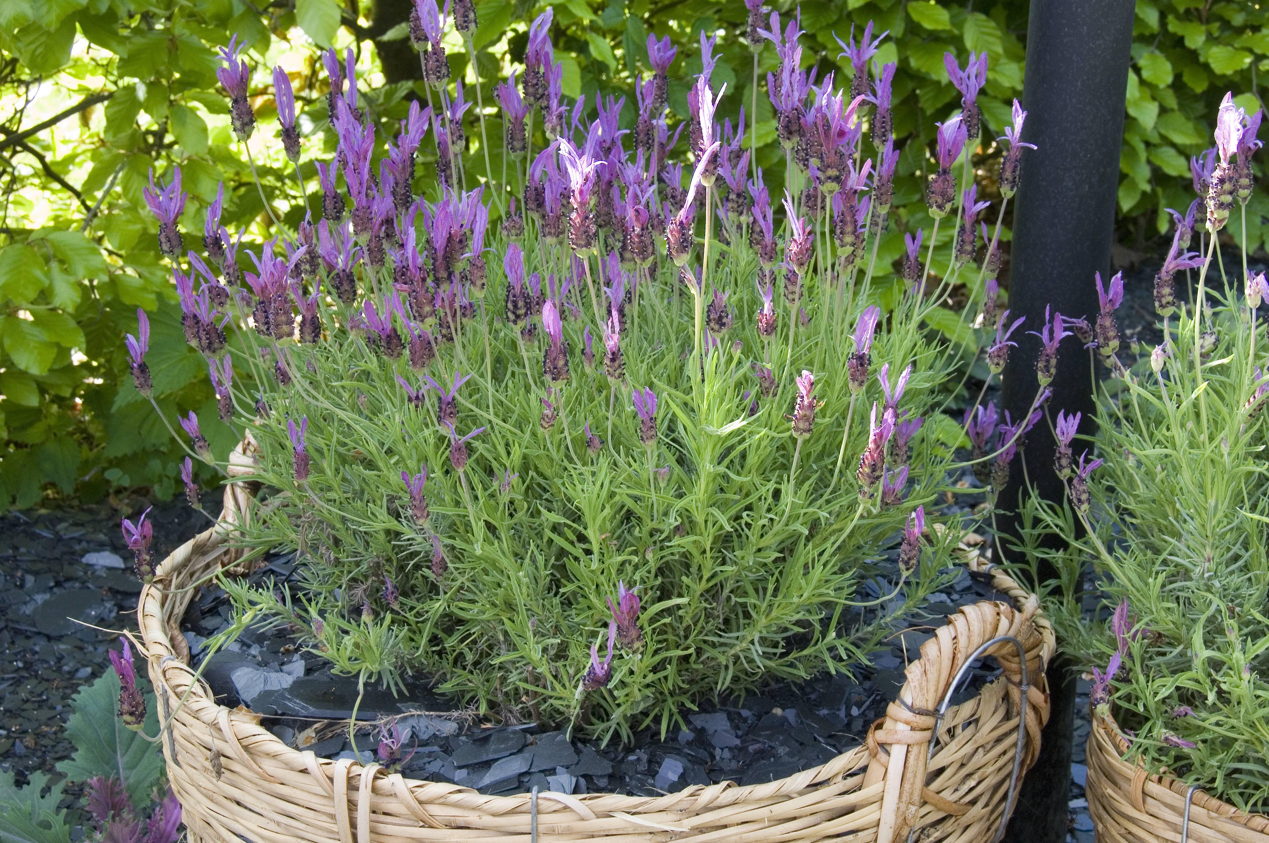 Choisir des plantes pour le balcon