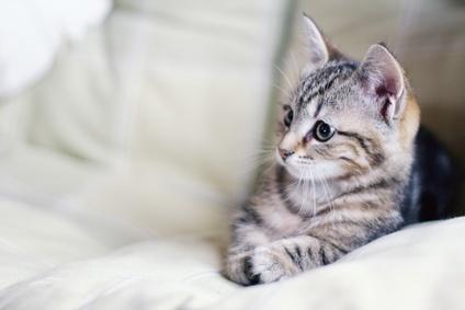 Comment enlever les poils d 39 animaux - Comment enlever les vers d un chat ...