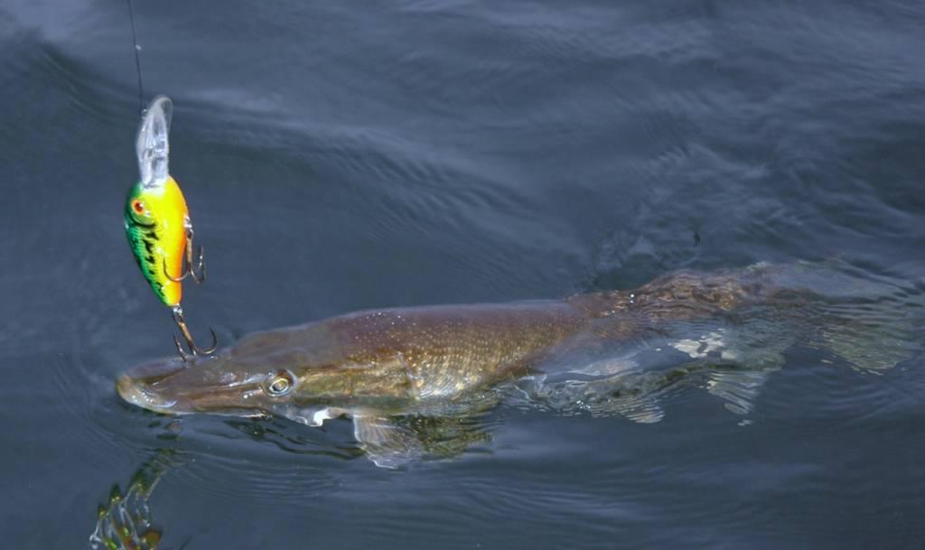 La pêche sur les lacs le bord dAltaï