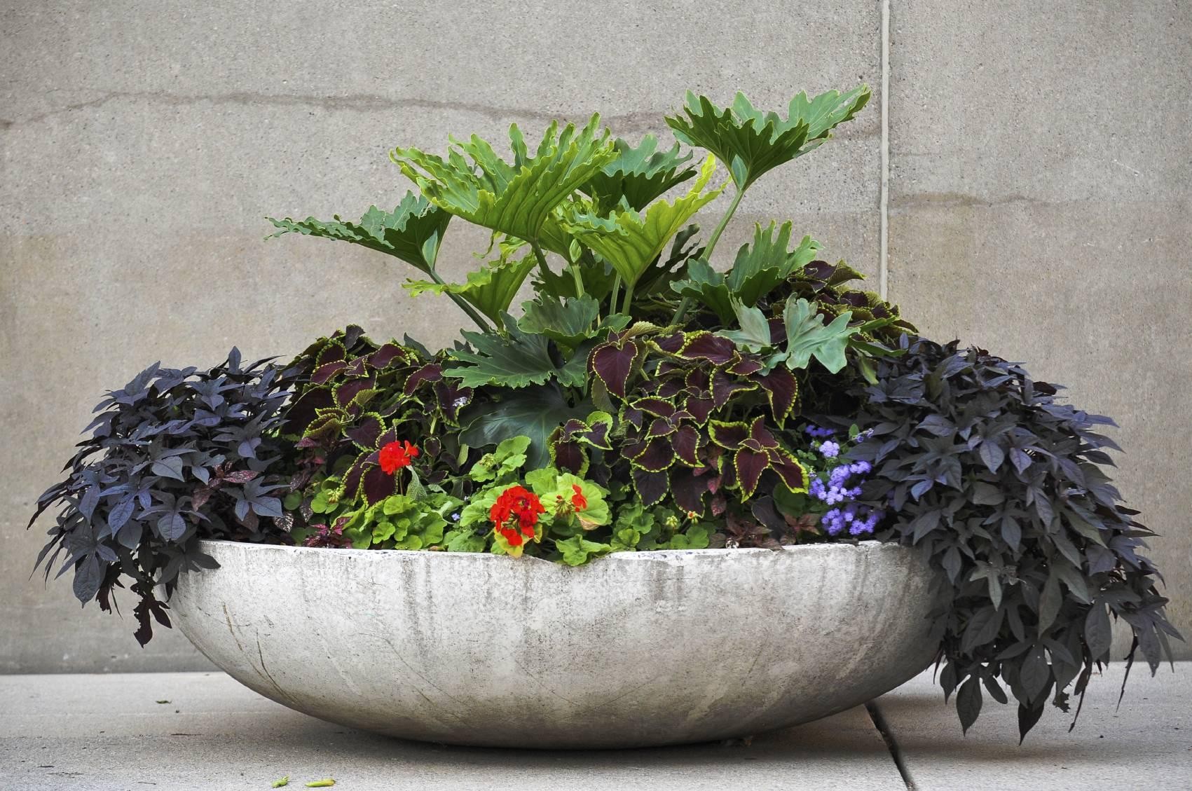 comment d corer sa terrasse avec des pots de jardin design. Black Bedroom Furniture Sets. Home Design Ideas