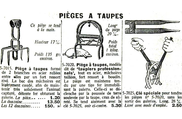 Sale temps pour les taupes - Comment se debarasser des taupes ...