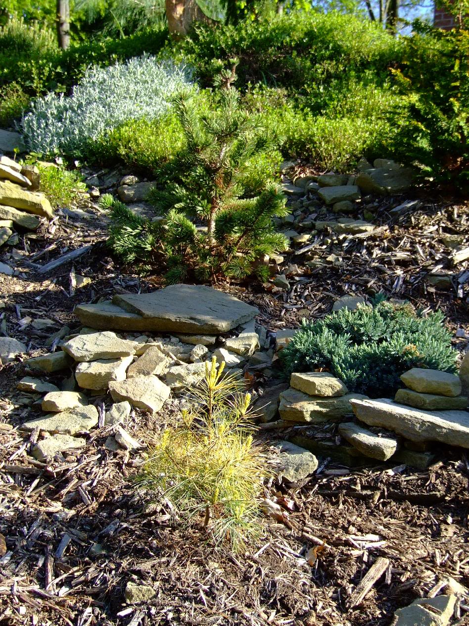 rocaille jardin cr er une rocaille. Black Bedroom Furniture Sets. Home Design Ideas