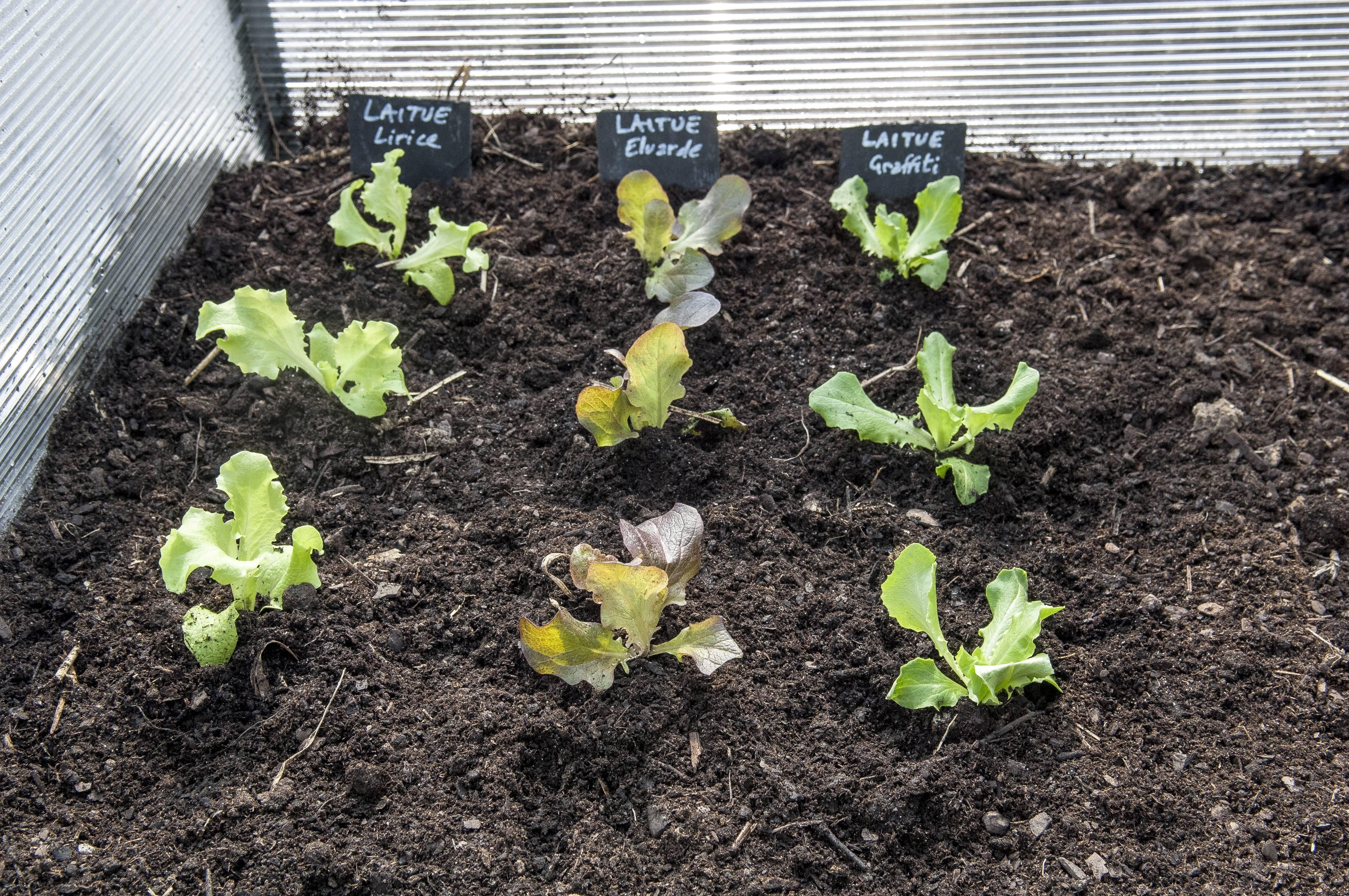 Que faire au jardin l 39 hiver - Quand tailler les abricotiers ...