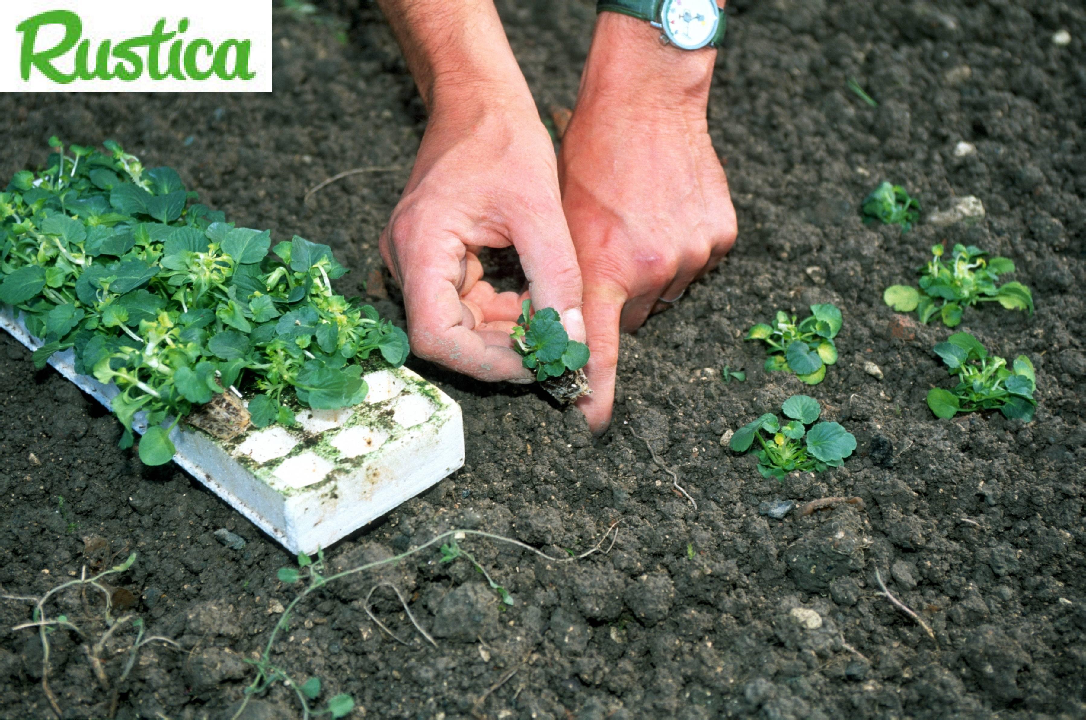 Acheter des jeunes plants pour son jardin for Acheter portillon jardin