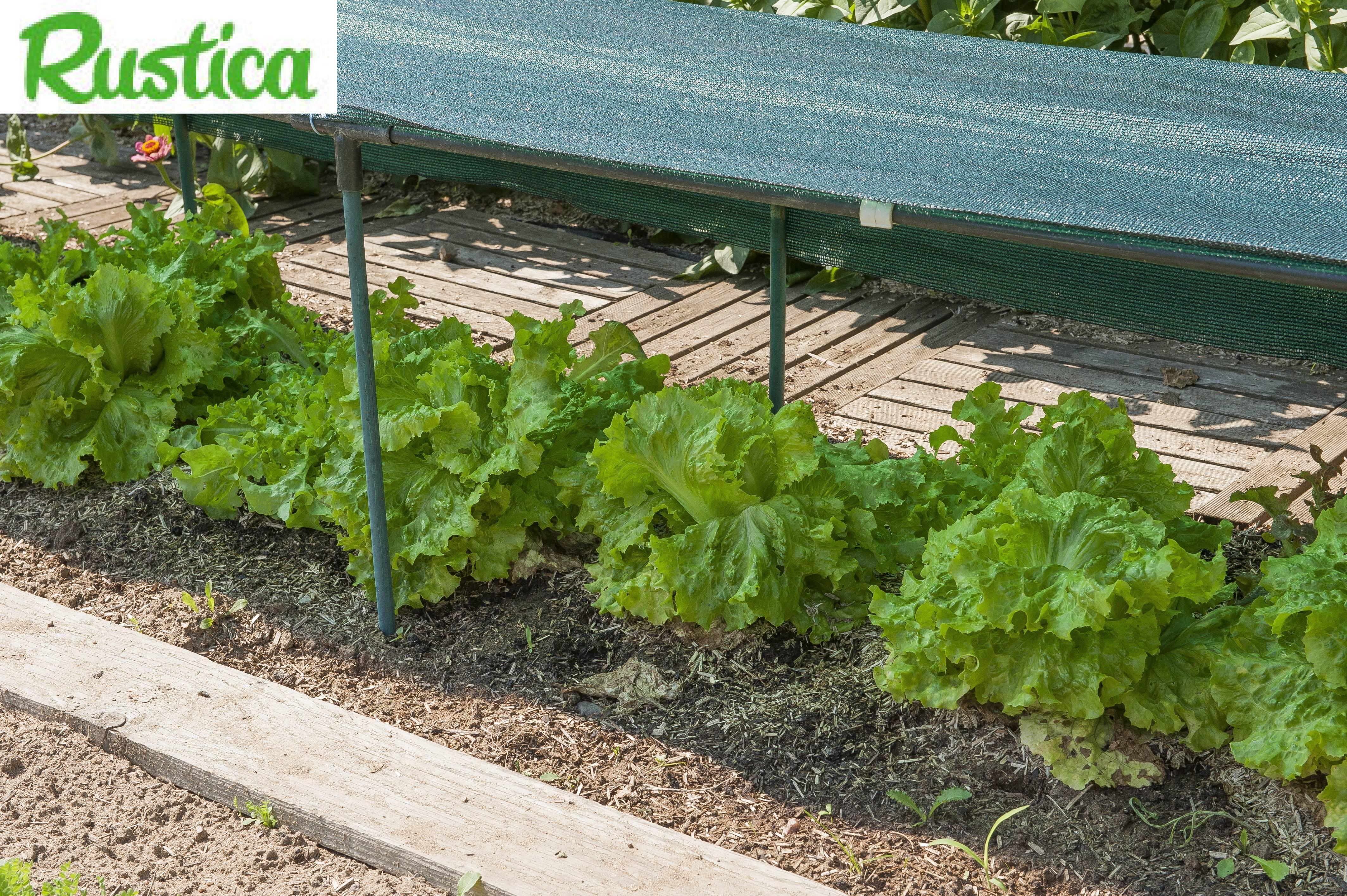 Jardin au soleil que faire - Que faire au jardin en septembre ...