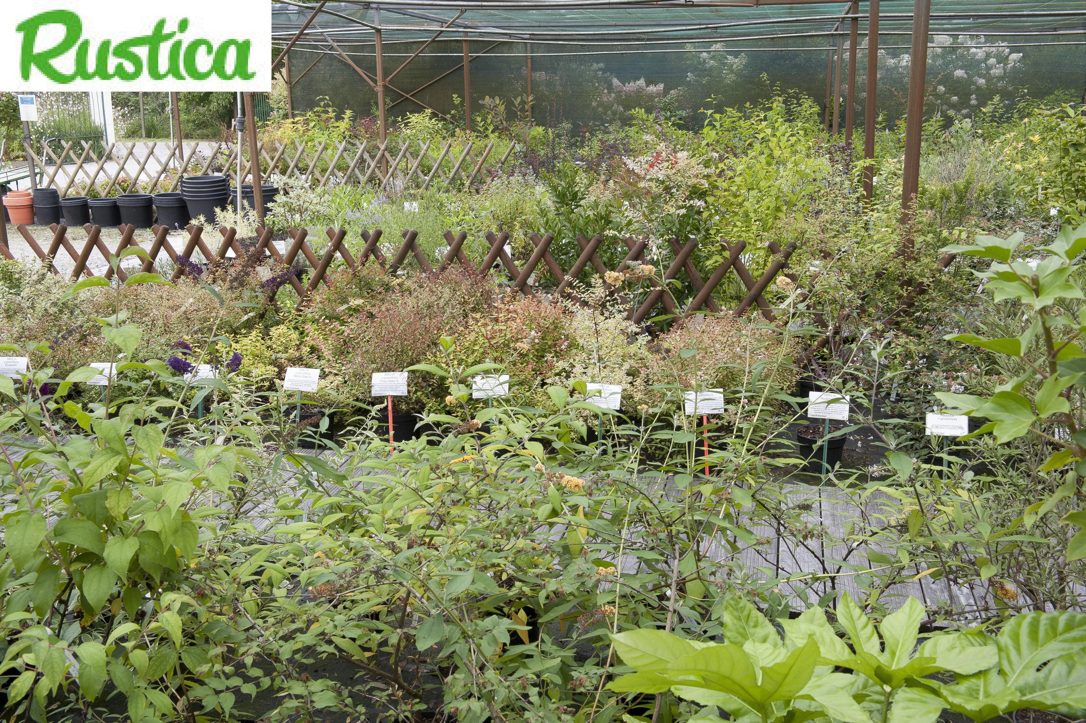 Comment Visiter Une P Pini Re Ou Un Jardin