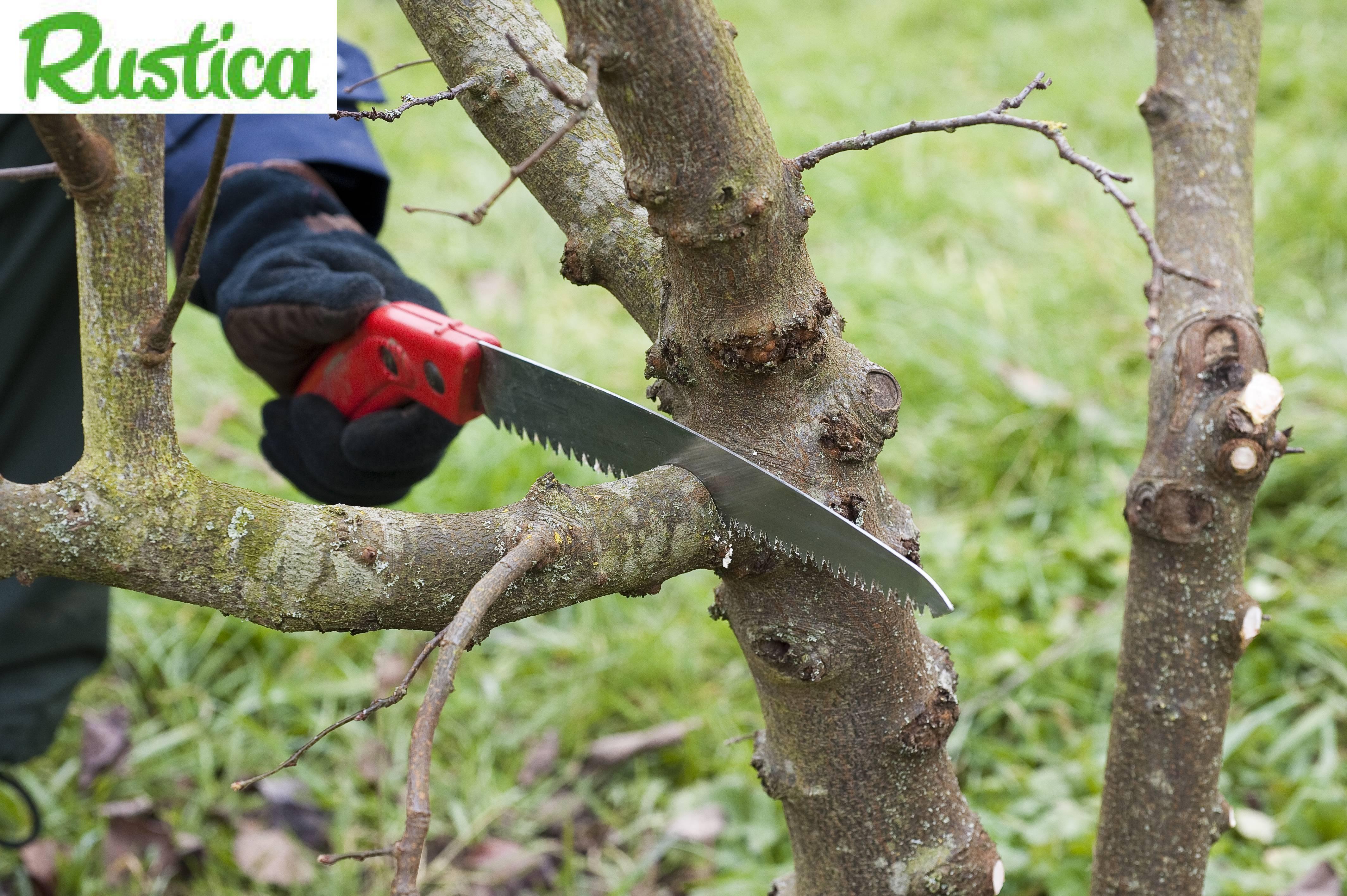 Comment tailler ses plantes - Comment tailler un arbre ...