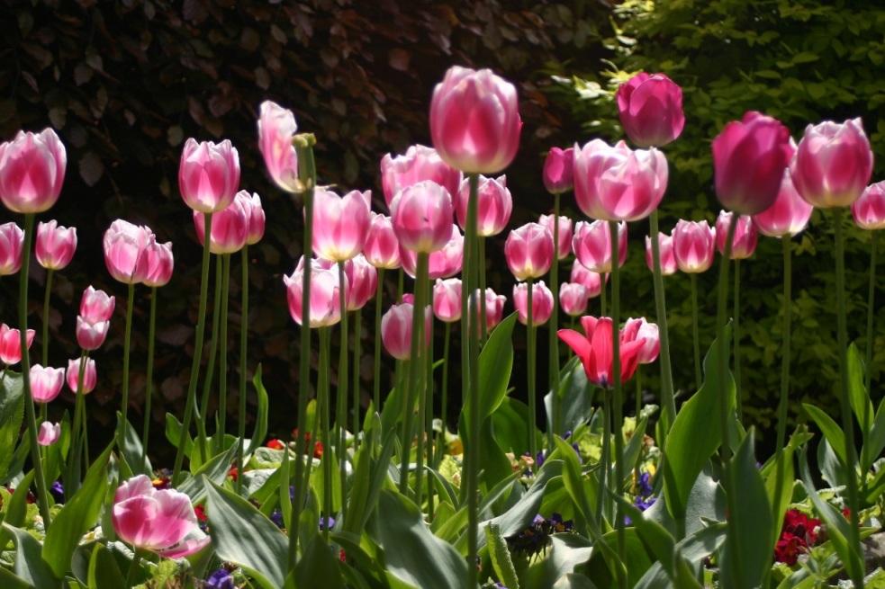 Saisons au jardin - Les quatre saisons du jardinage ...