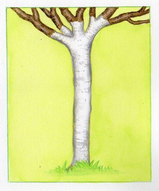 Traitement et entretien des arbres fruitiers - Maladie des arbres fruitiers ...