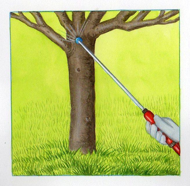 Traitement et entretien des arbres fruitiers - Traitement cerisier bouillie bordelaise ...