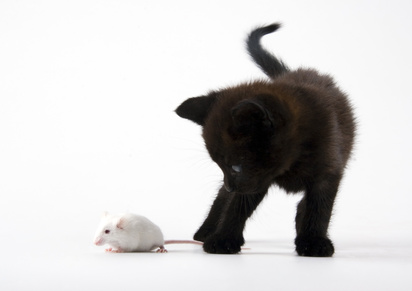 lutter contre les souris les solutions pour se d barrasser des souris. Black Bedroom Furniture Sets. Home Design Ideas