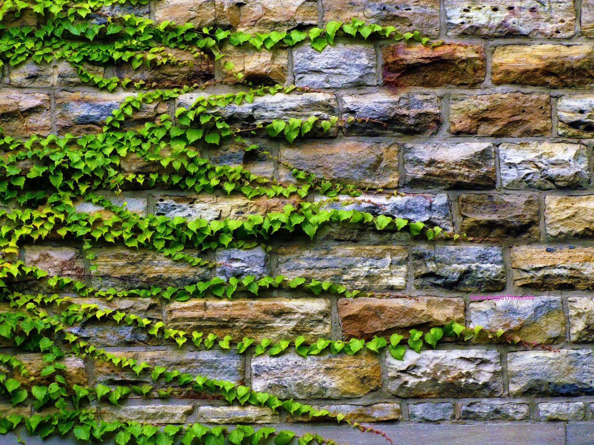 murs treillages pergolas tonnelles quel support pour les plantes grimpantes. Black Bedroom Furniture Sets. Home Design Ideas