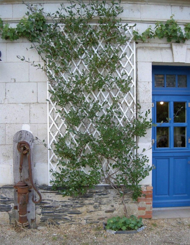 Murs treillages pergolas tonnelles quel support pour les plantes grimpan - Support fer forge pour rosier grimpant ...