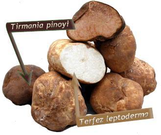 Truffes truffe noire du p rigord truffe de bourgogne truffe blanche d 39 italie - Comment cuisiner les truffes noires ...