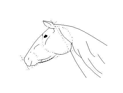 Dessiner un cheval - Dessiner tete de cheval ...