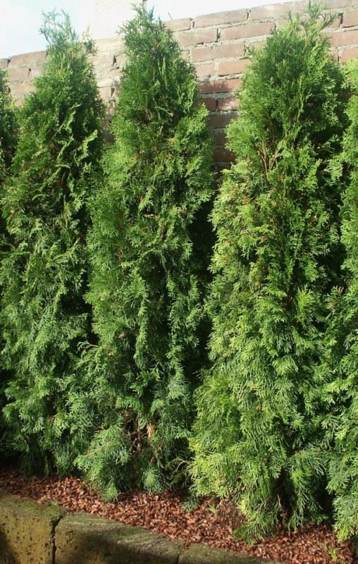 Choisir et planter des arbres - Distance plantation arbre maison ...
