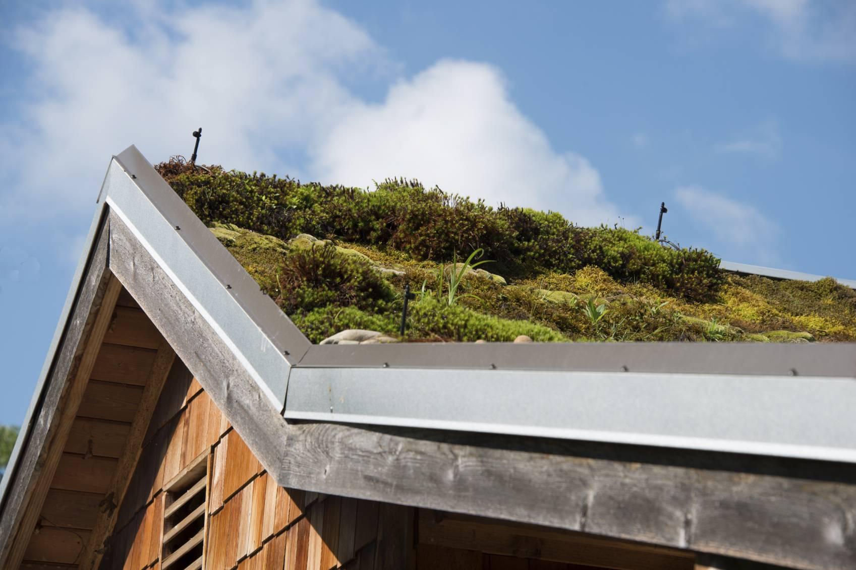 Avantages et inconv nient d 39 un toit v g tal - Toit vegetalise avantages inconvenients ...