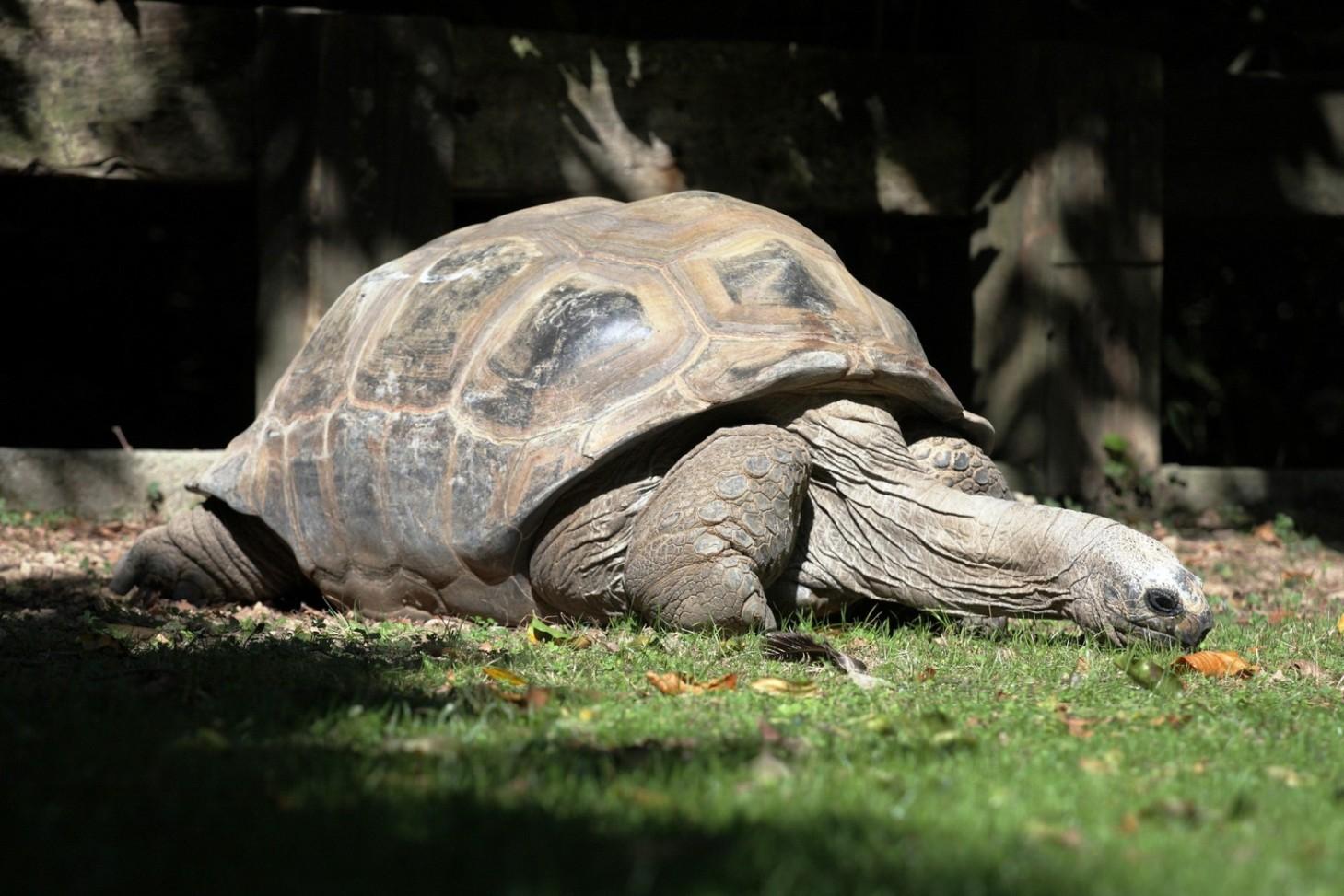 Tortue d 39 hermann mieux connaitre la tortue d 39 hermann - Images tortue ...