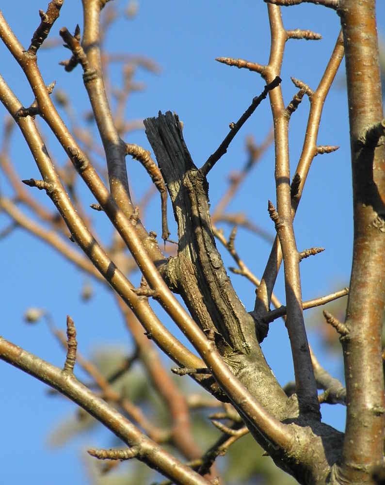 Quelques liens utiles - Que faire au jardin en novembre ...