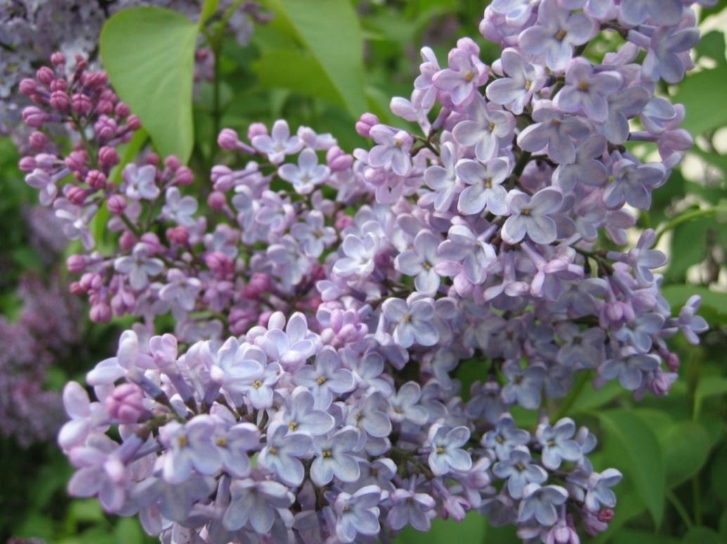 Astuces jardinage pour un beau jardin facilement for Avoir un beau jardin