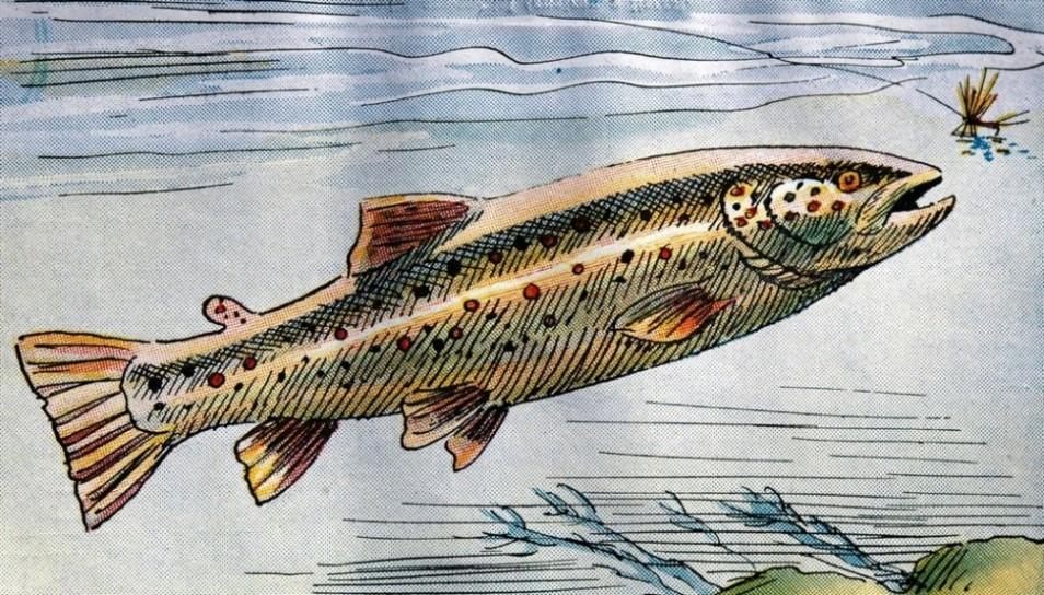 Les noms sur la pêche