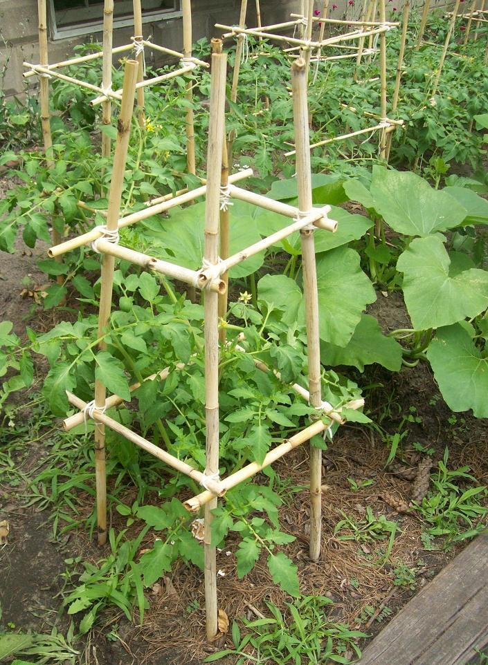 Palissage plante tuteur plante palisser et tuteurer ses plantes - Tuteur tomate avec ficelle ...