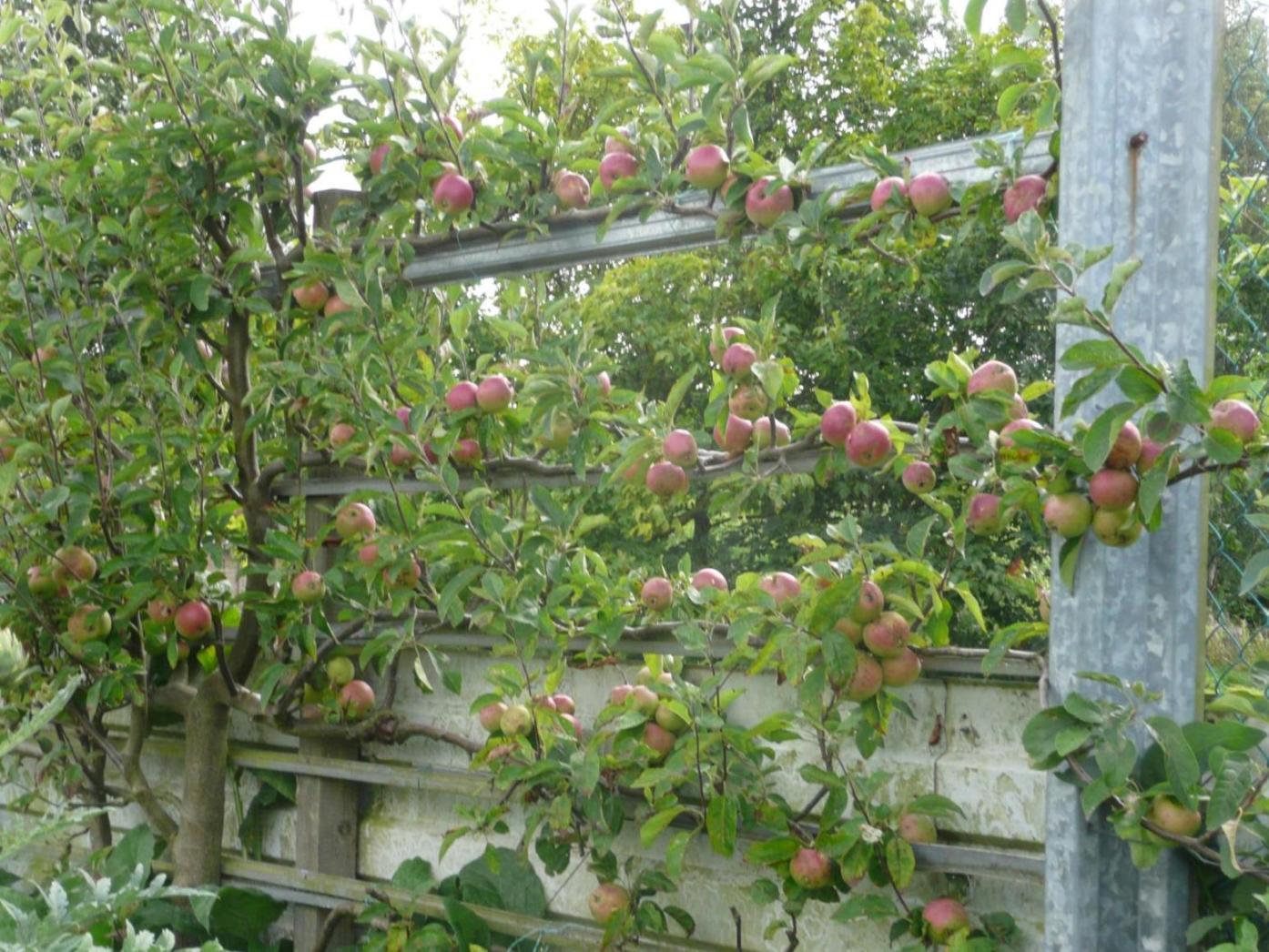 Verger plein vent verger paliss les diff rents types de verger - Traitement arbres fruitiers ...