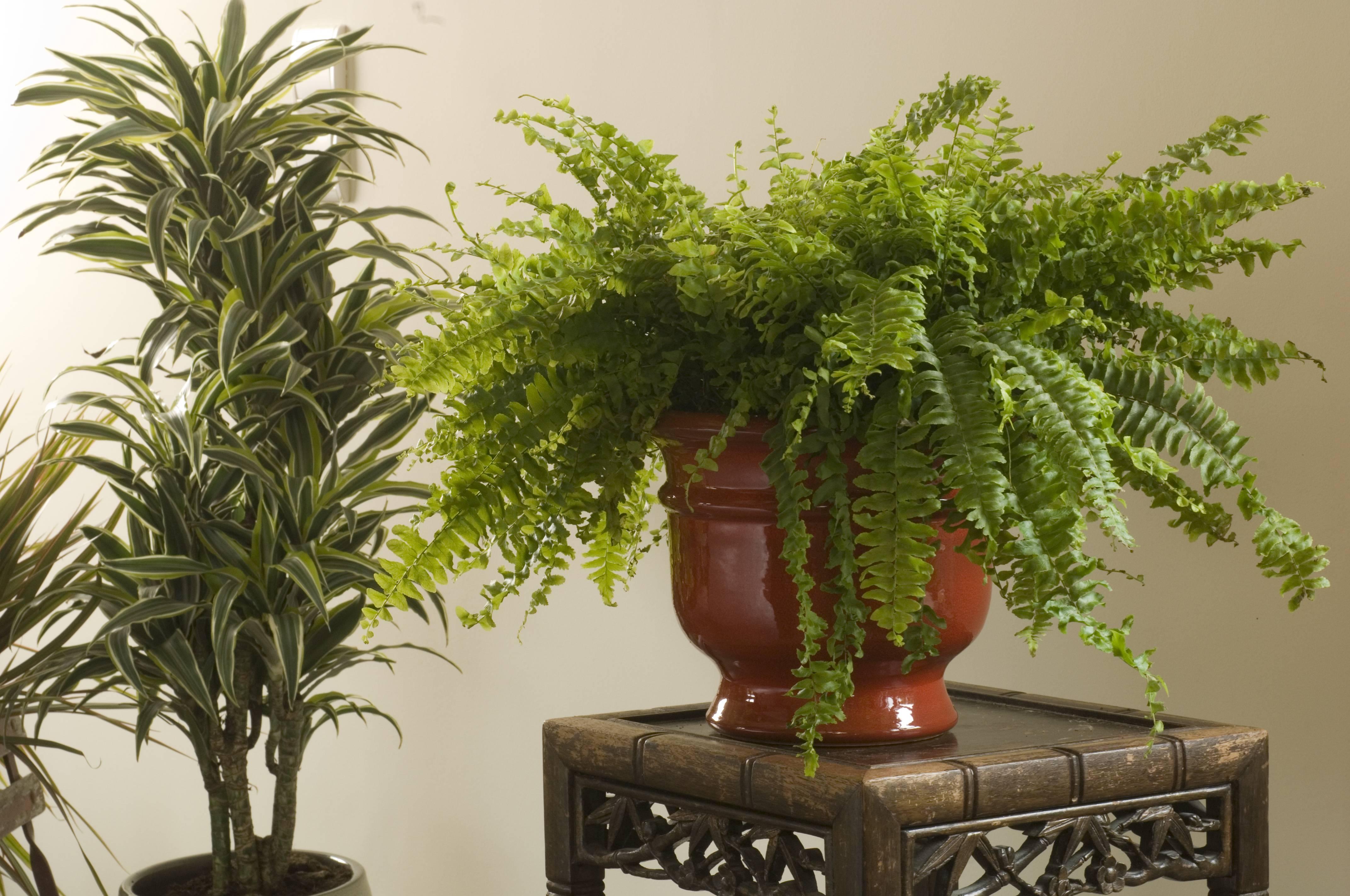 Reconna tre les maladies des plantes d 39 int rieur - Plante d interieur photo ...